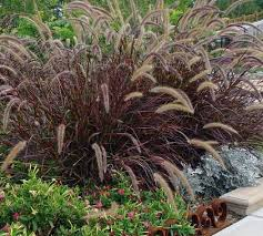 72 best plants images on plants landscape grasses and