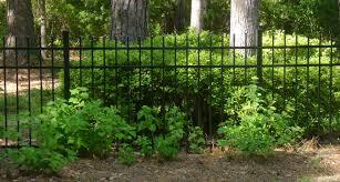 garden ideas for wooded areas native garden design