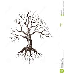 big leafless tree from 50 million high quality
