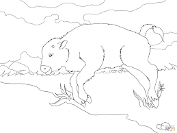 baby bison coloring page free printable coloring pages