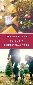 the definitive best time to buy a tree