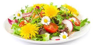 cuisiner les fleurs les fleurs comestibles vivaces cuisine sauvage avec plantes et
