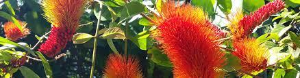 Botanical Gardens Volunteer volunteer miami beach botanical gardens