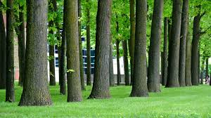 5 best trees to plant in southern ontario van till tree care