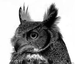 great horned owl by agnes green on deviantart