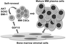 growth differentiating factor 15 enhances the tumor initiating and