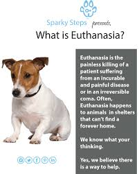 pet euthanasia what is euthanasia sparky steps