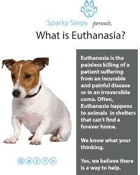 dog euthanasia what is euthanasia sparky steps