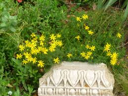 texas native plants nursery plant of the month garden center nursery san antonio grass ideas