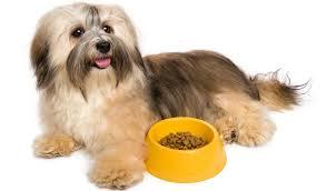 best dog food for havanese 7 vet recommended brands