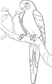 fancy parrot coloring page 77 in coloring site with parrot