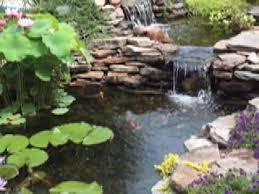 blue heron koi fish protection water gardens ponds koi birds