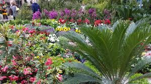 immagini di giardini fioriti viali piazze e strade centro si trasformano in splendidi