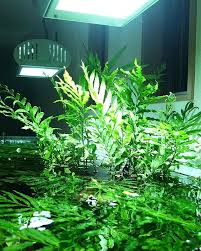 Aquascape Aquarium Plants 95 Best Freshwater Aquarium Plants Images On Pinterest