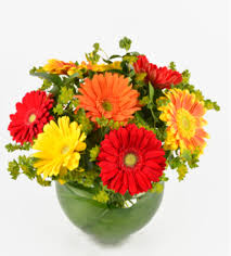 gerbera bouquet schnucks florist and gifts grand gerbera louis mo 63132