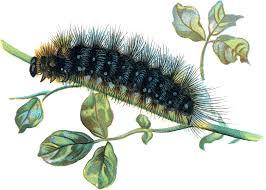 caterpillar png transparent images png all
