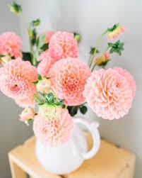 dalia in vaso foto gratis dalia flowers flores vaso buquê imagem gratis
