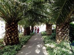 πάνω από 25 κορυφαίες ιδέες για palm trees landscaping στο