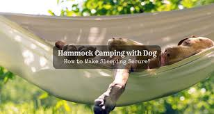 hammock camping with dog how to make sleeping secure just