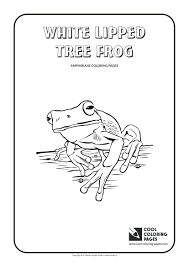 frog amphibian coloring page red eyed tree free printable pages
