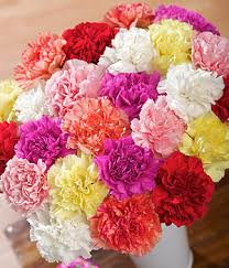 bulk carnations bulk wholesale carnations las vegas nevada