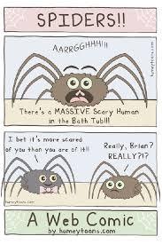 Misunderstood Spider Meme 16 Pics - spiders phil ebersole s blog