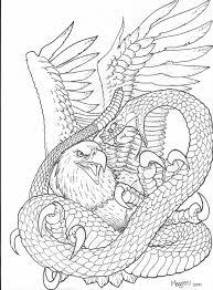 realistic eagle drawing snake eagle picture eagle
