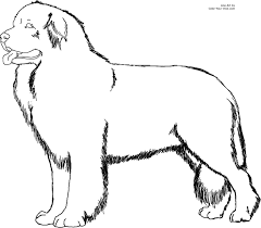 Newfoundland Dog Coloring Page Dogs Coloring Pages