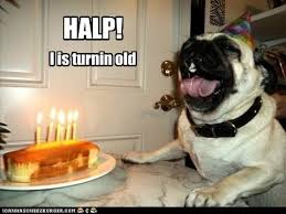 Happy Birthday Pug Meme - halp i has a hotdog dog pictures funny pictures of dogs dog