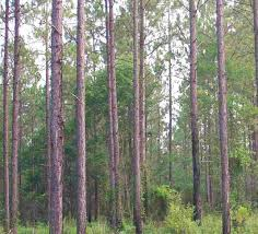 Timberland resource services land sales forestry consultant georgia