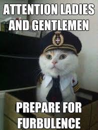 Working Cat Meme - cat is love cat is life