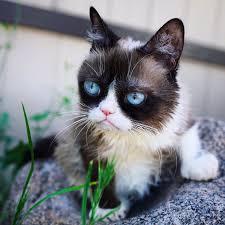 1074 best grumpy cat images on pinterest grumpy cat grump cat and