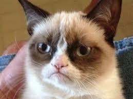 Angry Cat Meme - angry cat meme meme generator