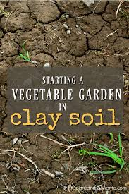how to start a vegetable garden for beginners starting a vegetable garden in clay soil preparednessmama