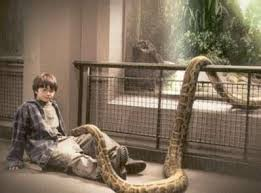 Photo of Harry Potter in the Reptile Room at the London Zoo