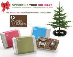 plantable packaging spruce trees sprout from pangea organics boxes