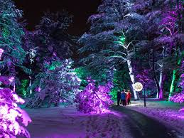 up your holidays at illumination tree lights