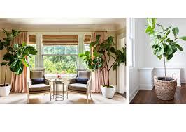 how to use plants in the interior u2013 basics of interior design u2013 medium