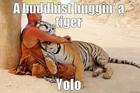 Yolo Meme - a buddhist huggin a tiger yolo funny meme