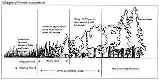 landowner u0027s guide woodcock