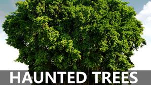top 10 haunted trees in india haunted