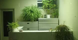 plantes bureau choisir les plantes pour bureau sur maison jardin by excite fr