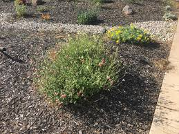 california native plants landscaping water efficient garden save water beautifully build a water