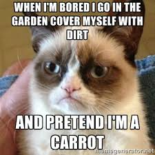 When I M Bored Meme - 15 best bored pictures and images