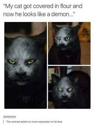 Halloween Meme Funny - funny halloween cats for a laugh fridayfrivolity devastate boredom