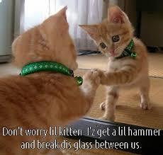 Funny Kitten Meme - image dont worry lil kitten i gets hammer and break dis glass