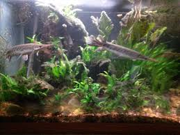 aquascape opinions 300g monsterfishkeepers com