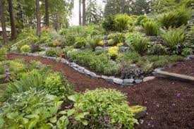 pacific nw an old seattle garden comes to life with new color