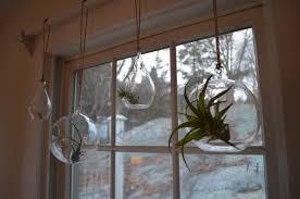 air plants the kitchen sink