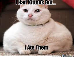 Cat Soon Meme - fat cat soon meme cat best of the funny meme